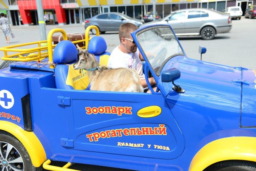 Волгоградец вернул в зоопарк козу-беглянку, фото-2