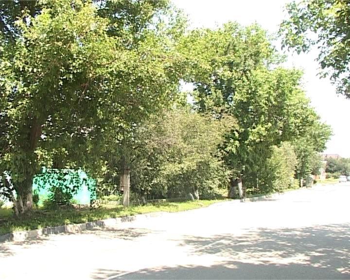 Дерево раздора. Старый ясень стал причиной ссоры между соседями (фото) - фото 1