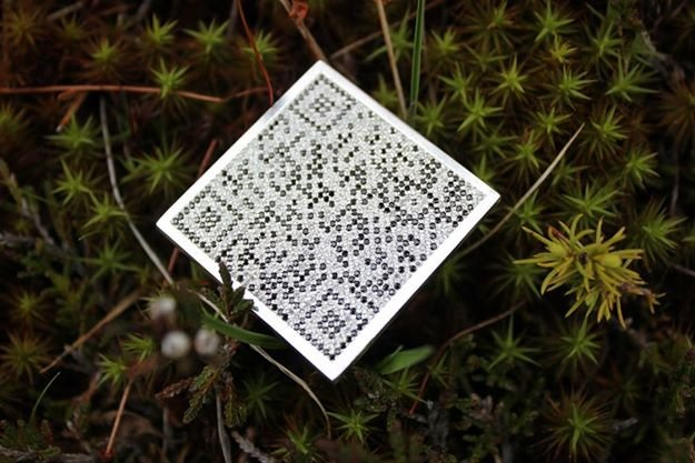 Тайный «код» полтавчанки Веры Бублик (фото) - фото 3