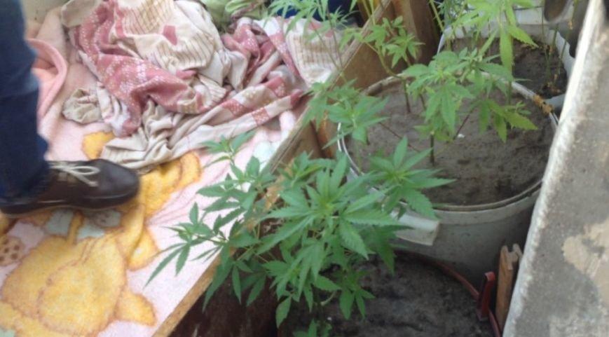 В Днепродзержинске продолжают изымать коноплю и марихуану (ФОТО) (фото) - фото 7