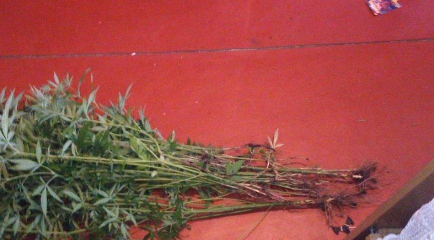 В Днепродзержинске продолжают изымать коноплю и марихуану (ФОТО) (фото) - фото 6