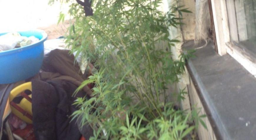 В Днепродзержинске продолжают изымать коноплю и марихуану (ФОТО) (фото) - фото 8