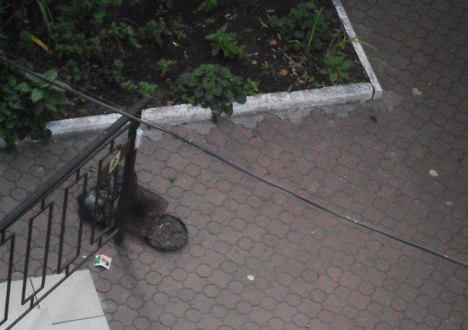 В Кривбассе по ночам вандалы жгут лавочки на Советской  площади под горисполкомом и крушат благоустроенные парки (ФОТО), фото-1