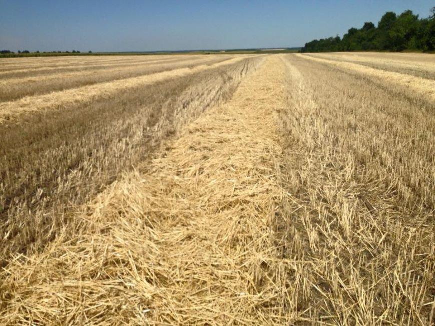 В Одесской области украли 6 гектаров пшеницы: фермер не верит, что милиция найдет вора (ФОТО) (фото) - фото 1
