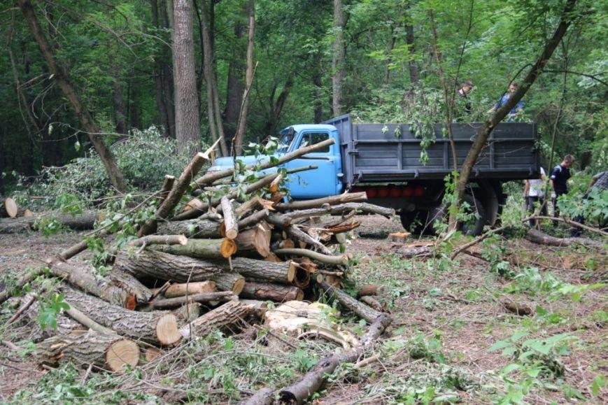 На Кордовке уничтожили 78 деревьев и поставили забор, фото-5