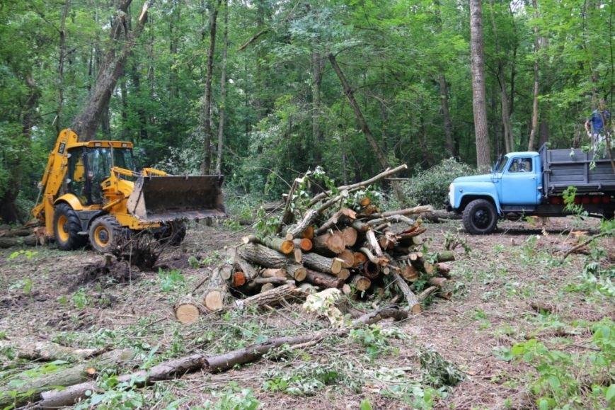На Кордовке уничтожили 78 деревьев и поставили забор, фото-6