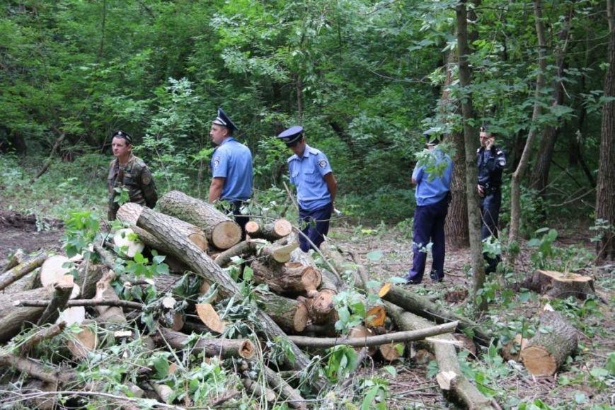 На Кордовке уничтожили 78 деревьев и поставили забор, фото-1