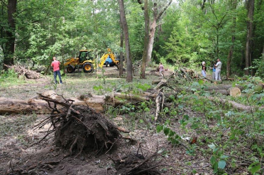 На Кордовке уничтожили 78 деревьев и поставили забор, фото-4