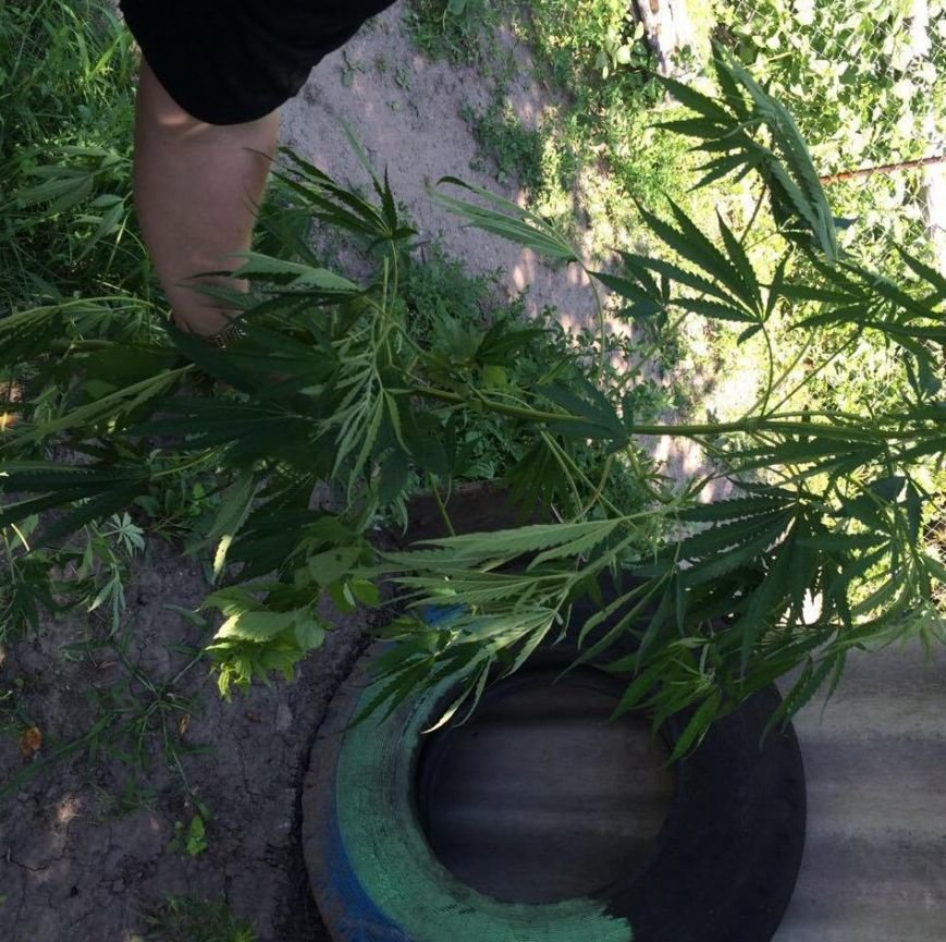 В квартире ранее судимой жительницы Днепродзержинска обнаружили коноплю и марихуану (фото) - фото 3