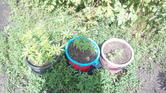 Харьковчанин выращивал у себя дома каннабис (ФОТО) (фото) - фото 1