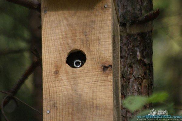 Под Гродно дачники массово устанавливают видеокамеры в скворечниках (фото) - фото 4