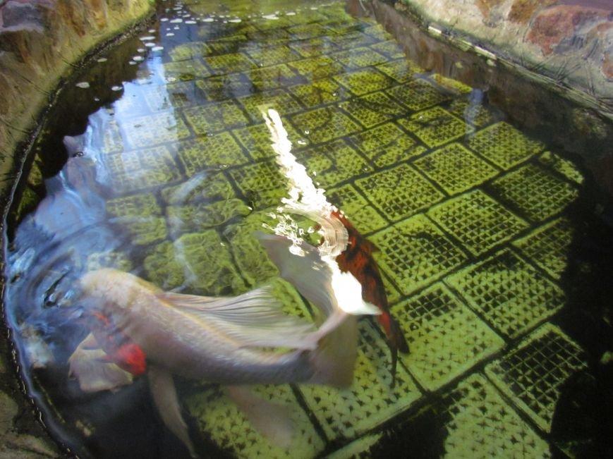В мариупольской котельной завелись экзотические рыбы (ФОТОФАКТ), фото-4