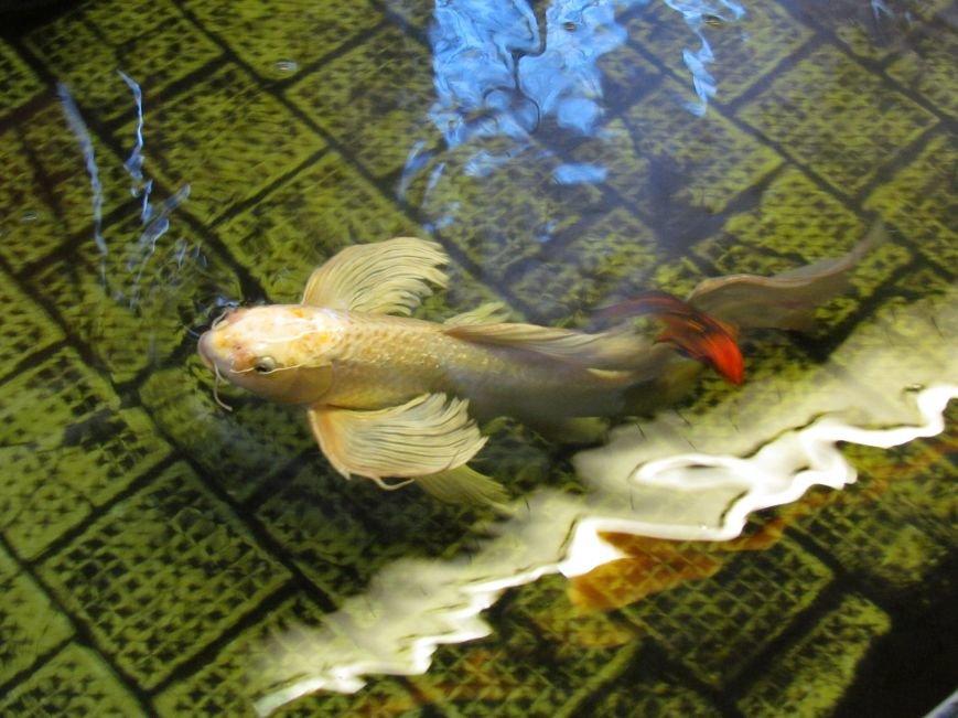 В мариупольской котельной завелись экзотические рыбы (ФОТОФАКТ), фото-3