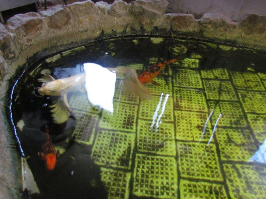 В мариупольской котельной завелись экзотические рыбы (ФОТОФАКТ), фото-2