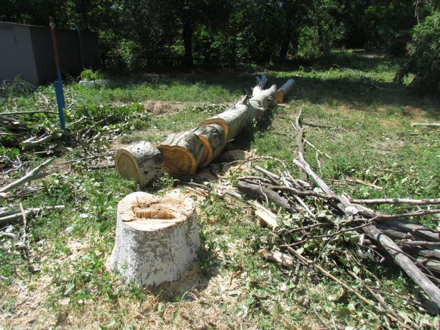 Мариупольские защитники экологии забили напрасную тревогу (ФОТО), фото-2