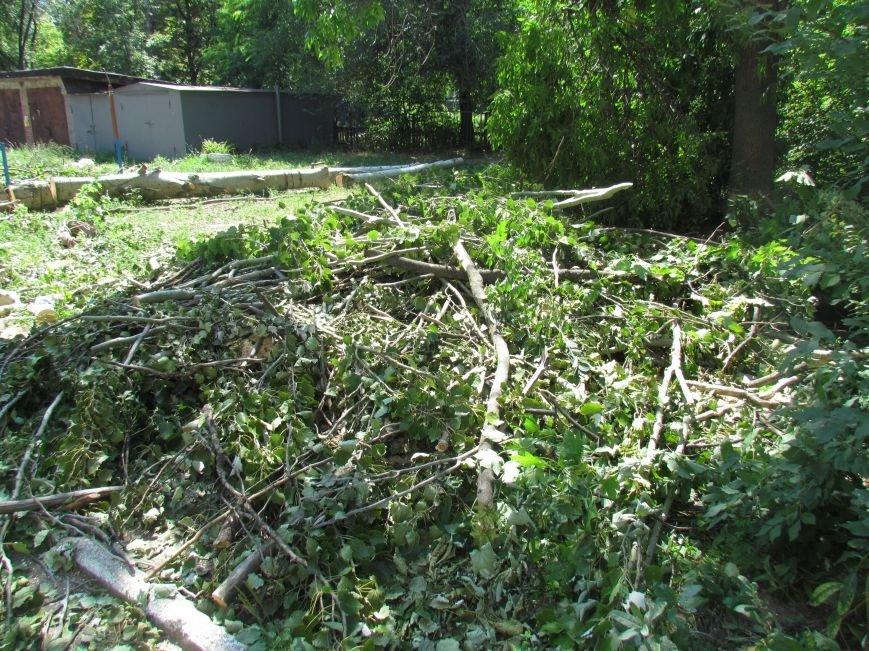 Мариупольские защитники экологии забили напрасную тревогу (ФОТО), фото-1