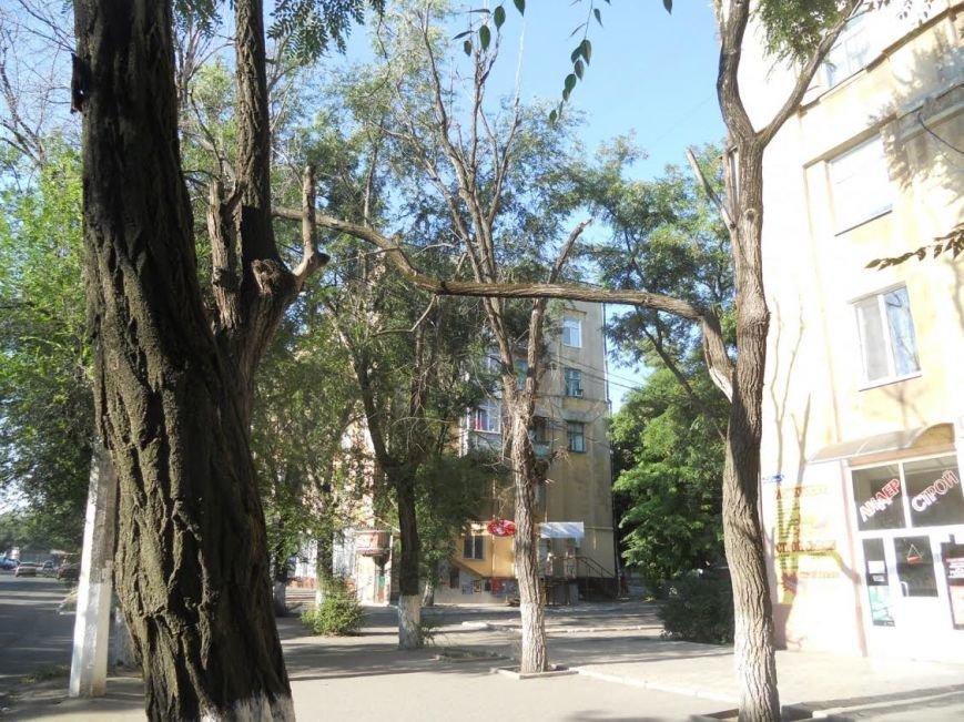 На Левоборежье Маариуполя сломанное дерево повисло на проводах (ФОТОФАКТ) (фото) - фото 1