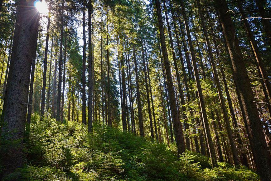Прем'єр-міністр вимагає зупинити вирубку лісу на Буковині та в Закарпатті, фото-1