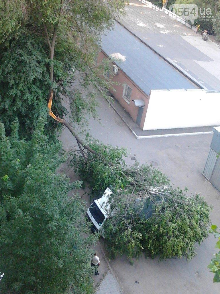 В Кривом Роге: в реке обнаружили расчлененный труп, на грузовик упало дерево, криворожанин предпочел умереть, а не заявлять на любимую (фото) - фото 1