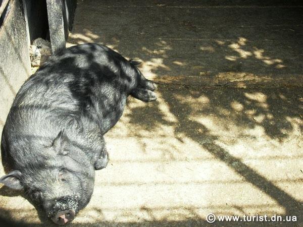 Как на войне выживают звери: история одного зоопарка (фото) - фото 2