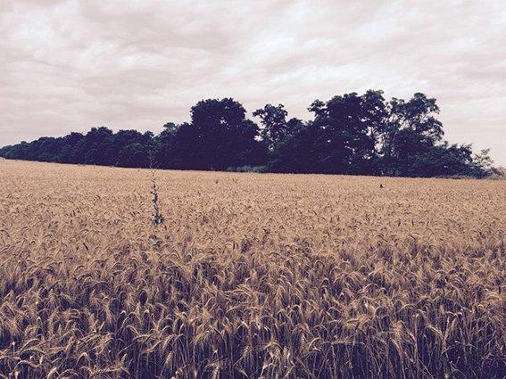 На земле, взятой в аренду у государства под пастбище, фермер выращивал зерновые (фото) - фото 1