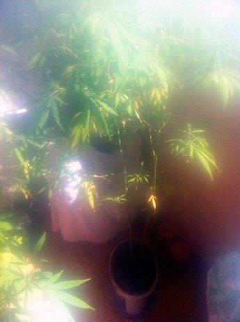 В центре Николаева «агроном» устроил нарколабораторию (ФОТО) (фото) - фото 2