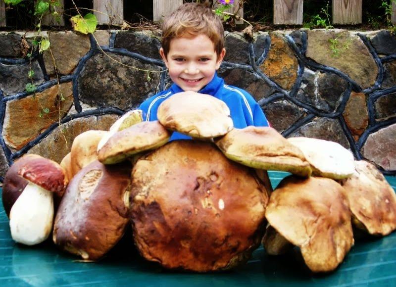 На Рівненщині пройде фестиваль грибів (фото) - фото 1