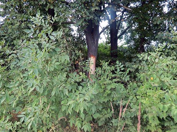 ДТП у селі Павлівка: двоє людей загинуло, ще одна - у лікарні (ФОТО) (фото) - фото 2