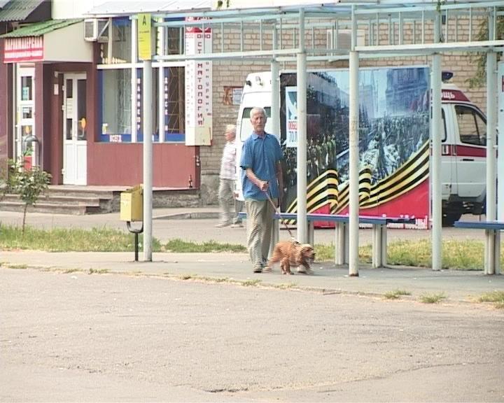 В Армавире определены места для выгула собак (фото) - фото 1