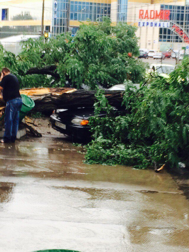 На Академика Павлова из-за непогоды дерево рухнуло на автомобиль (ФОТОФАКТ) (фото) - фото 1