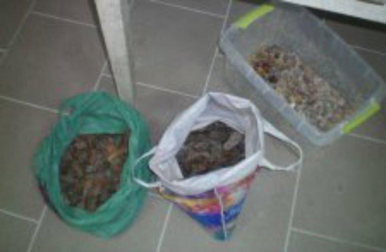 У Чернівцях «накрили» підпільний цех з обробки бурштину (фото) - фото 1