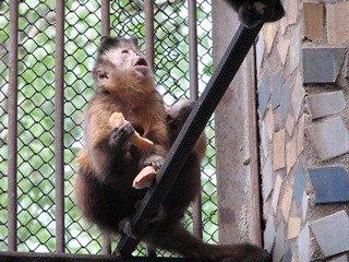 Зоопарк Николаева отметился бэби-бумом (ФОТО) (фото) - фото 1
