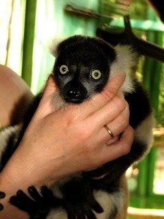 Зоопарк Николаева отметился бэби-бумом (ФОТО) (фото) - фото 3