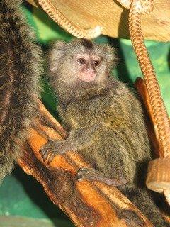 Зоопарк Николаева отметился бэби-бумом (ФОТО) (фото) - фото 2