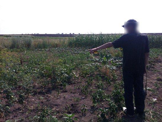 У Хмельницькій області спіймали наркозалежного, який викрав мак із городу місцевої пенсіонерки (ФОТО) (фото) - фото 2