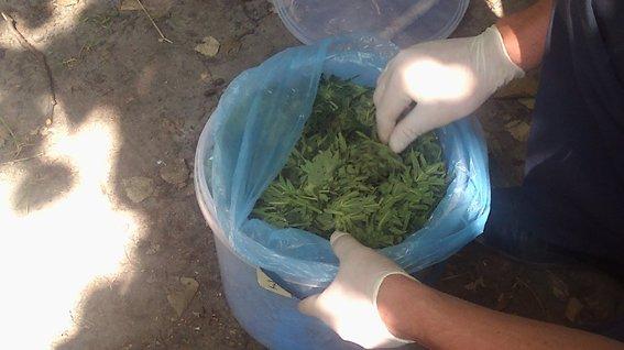 На Рівненщині  вилучили понад 10 кг марихуани та виявили плантації коноплі (+ ФОТО) (фото) - фото 1