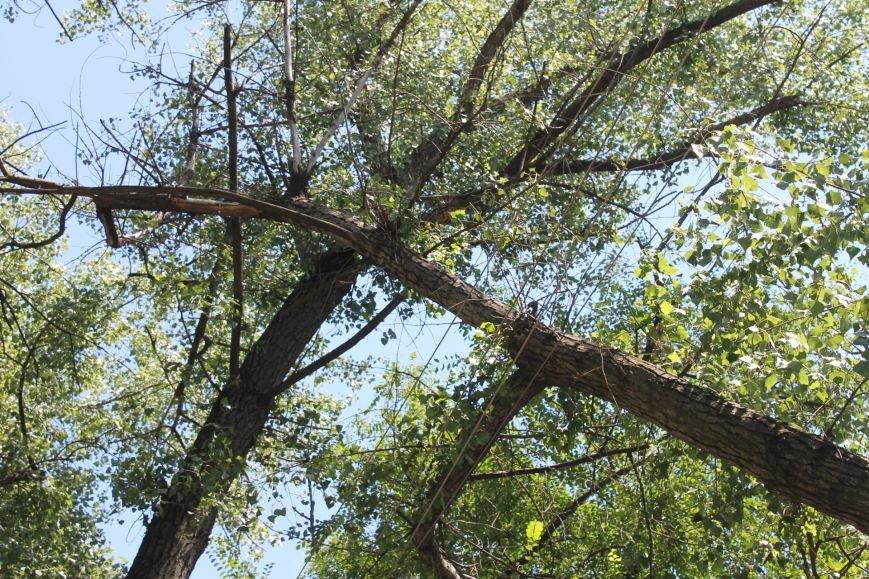 Общение с коммунальщиками: на проводах «Днепроблэнерго» висит дерево «Теплоцентрали» (ФОТО), фото-5