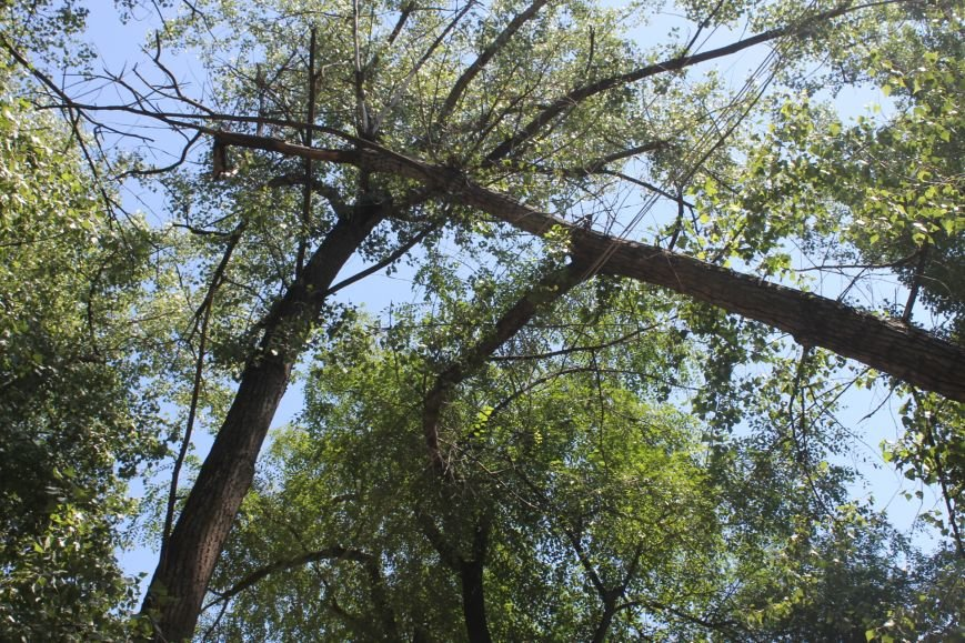 Общение с коммунальщиками: на проводах «Днепроблэнерго» висит дерево «Теплоцентрали» (ФОТО), фото-2