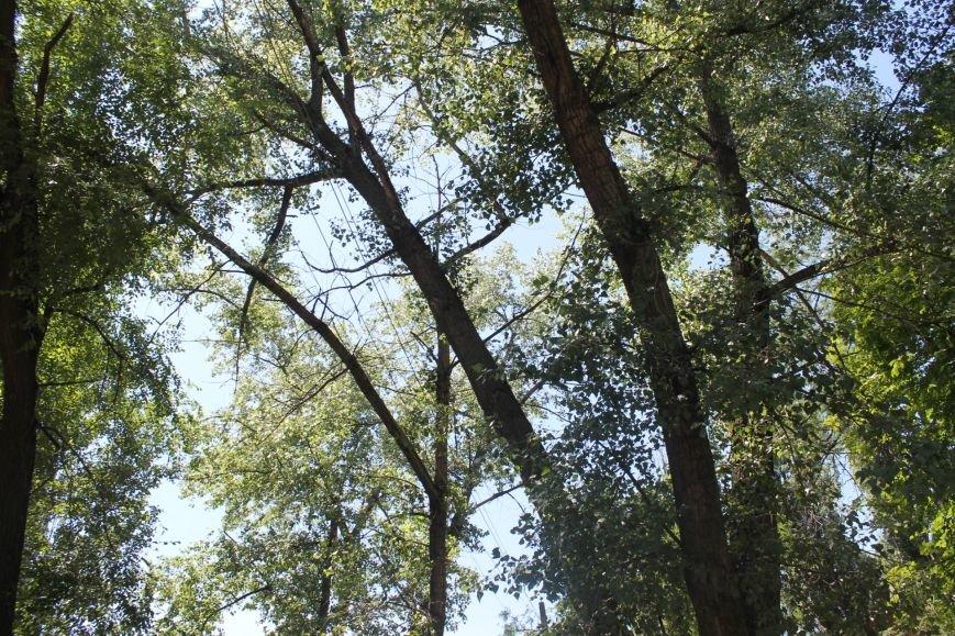 Общение с коммунальщиками: на проводах «Днепроблэнерго» висит дерево «Теплоцентрали» (ФОТО), фото-1