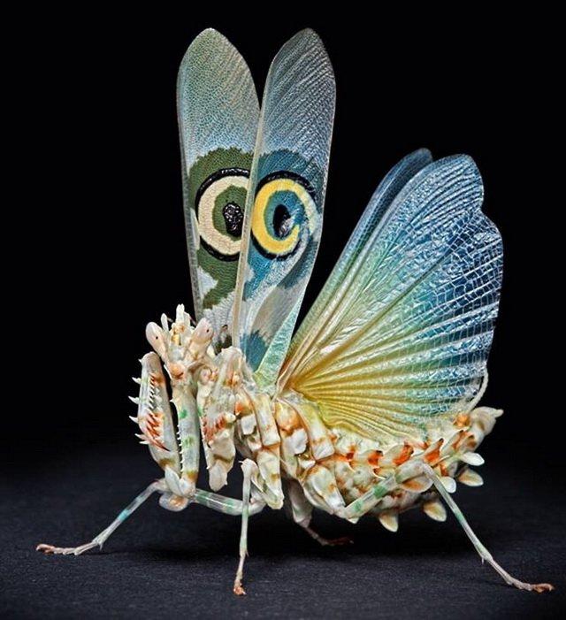 Выставка «Энтомология стекла» откроется в галерее ЦЕХ, фото-1