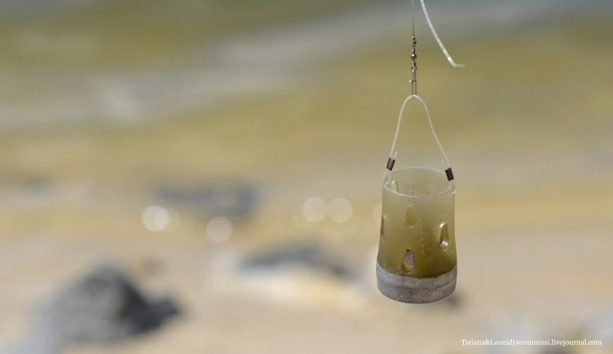 Фотофакт. В Гомеле прошёл чемпионат Беларуси по спортивной ловле рыбы на фидер (фото) - фото 1