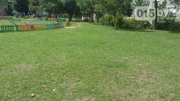 В Гродно крысы выбежали на детскую площадку, после того как заварили мусоропровод (Фото, Видео) (фото) - фото 1