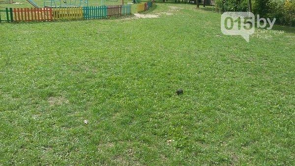 В Гродно крысы выбежали на детскую площадку, после того как заварили мусоропровод (Фото, Видео) (фото) - фото 2