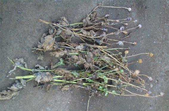Житель Кировоградщины сдал двух наркоманов. ФОТО (фото) - фото 1