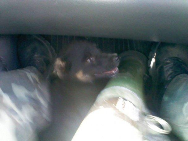Тварини – вірні друзі на передовій. Частина 2. (ФОТО) (фото) - фото 1