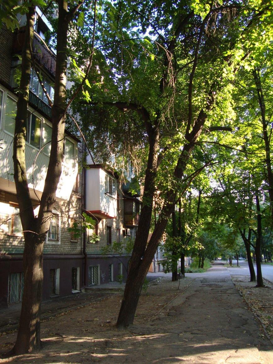 Коммунальщикам на заметку: опасные деревья на Мира, затопленный двор на Запорожской и амброзия на Яценко (ФОТО) (фото) - фото 4