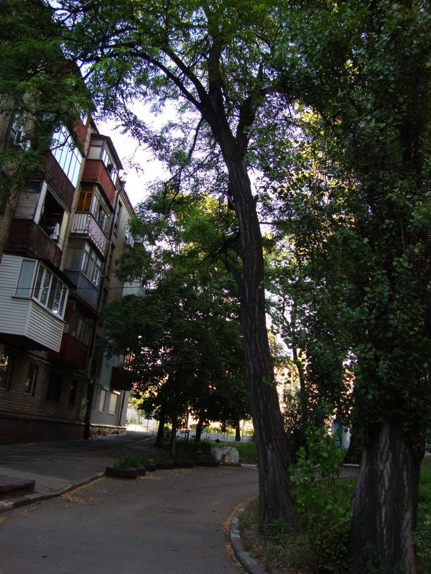 Коммунальщикам на заметку: опасные деревья на Мира, затопленный двор на Запорожской и амброзия на Яценко (ФОТО) (фото) - фото 5