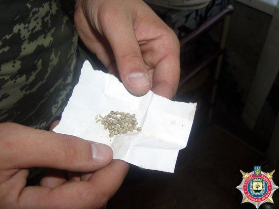 Тракторист из Славянского районе выращивал элитную голландскую коноплю (фото) - фото 1