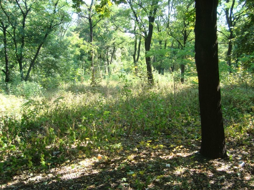 Почему никто не занимается белицким городским парком? (фото) - фото 1
