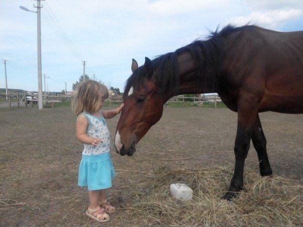 bd4d3fd-kids-horses-donbass